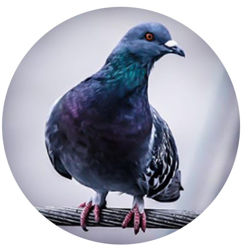 Pose anti-pigeon Protection par fils tendus